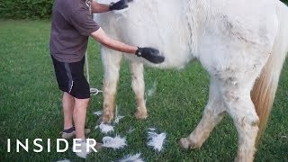 Gloves Remove Shedding Fur From Animals