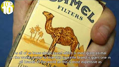 Top Ten Most Expensive Cigarette Brands In The World 2016