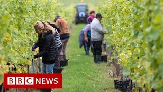 UK Immigration: No visas for low-skilled workers, government says - BBC News