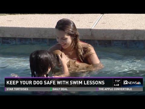 Teach your dog swim safety