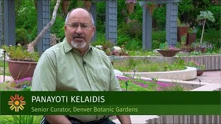 Plant Select South African Ice Plants with Panayoti Kelaidis, Denver