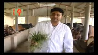 অর্গানিক ভাবে গরু মোটাতাজাকরণ ও ডেইরি খামার করে সাড়া ফেলেছে গাজীপুরের প্যারামাউন্ট এগ্রো, Cow farm