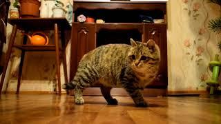 Новогодняя игра кошки