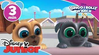 Bingo i Rolly w akcji: Ulubiona piłka Boba