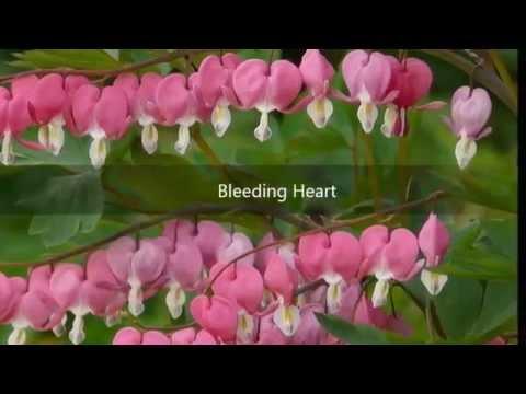 ดอกไม้ที่สวยที่สุดในโลก Most Beautiful Flowers In The World