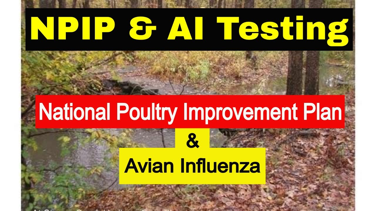 Steps To Npip Ai Poultry Testing Youtube