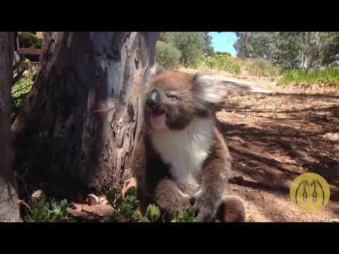 Only In Australia Funny Video Compilation =)