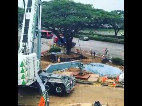 Moving tree in Singapore - Technology