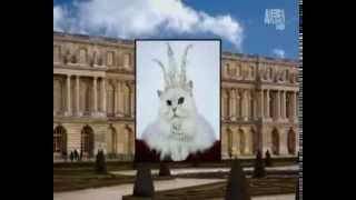 Персидская кошка: фото, описание породы, характер. Кошка персидской породы