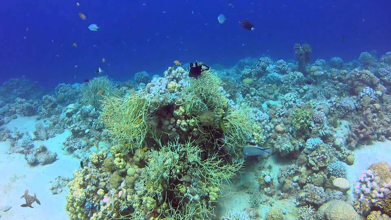 Jordan aqaba power station new dive site youtube for Aqaba dive