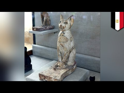 Dozens Of Cat Mummies And Statues Discovered In Egypt - TomoNews