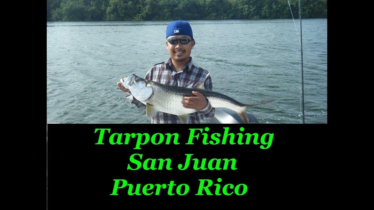 Tarpon Fishing San Juan Puerto Rico Youtube