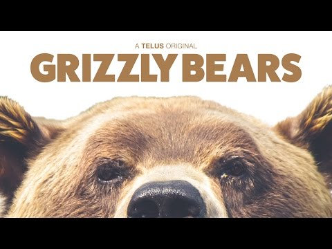 Grizzly Bears - Ambient 4K