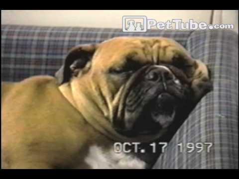 Funniest Pets & People: Episode 8 PetTube