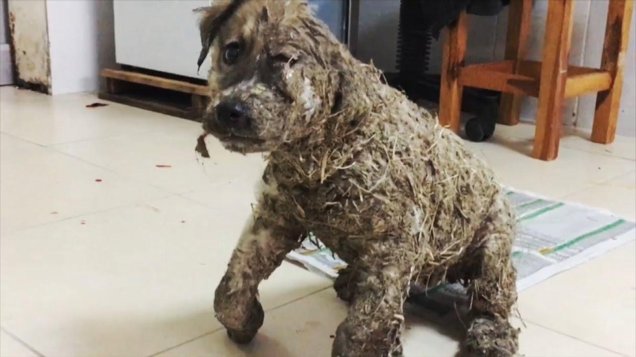 Das taten die Kinder mit diesem Hund - Seine Verwandlung hat alle verwundert