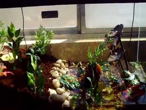 Reptilekeptile Contest Entry Pixie Frog Setup Youtube