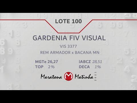 LOTE 100 Maratona Matinha