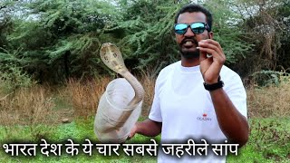 भारत देश के ये 4 सांप सबसे जहरीले होते है   Most 4 venomous snake from Indian