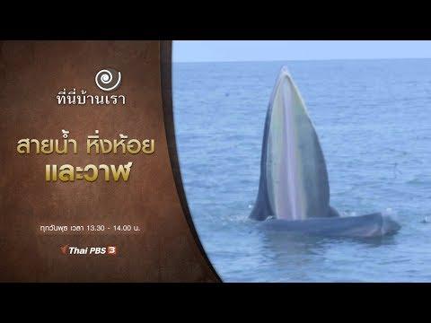 สายน้ำ หิ่งห้อย และวาฬ - วันที่ 13 Nov 2019