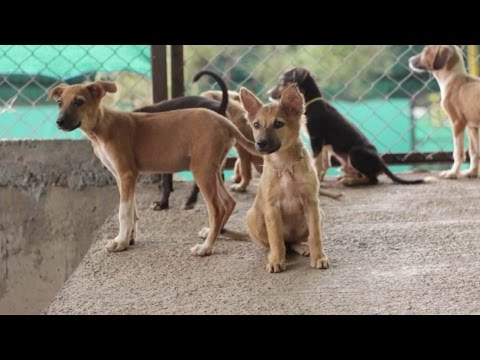 RESQ : Giving hope to street animals in India