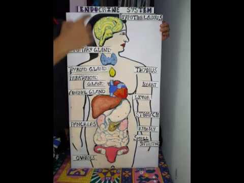 Working model based on endocrine system youtube working model based on endocrine system ccuart Gallery