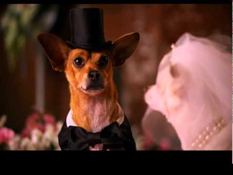 Extrait n°2 - Le Chihuahua de Beverly Hills 2 - le 7 février 2011 en Blu-ray, DVD et VOD