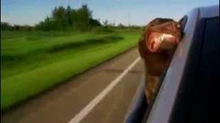 Dog With Its Head [Собака выглядывает из окна автомобиля]
