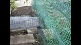 Chicken Coop And Brooder For Egg Laying Backyard Chickens