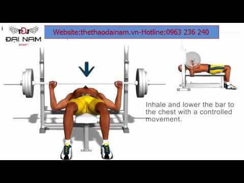 Bài tập đẩy tạ đơn đúng cách cùng với ghế đẩy tạ đơn Ben 601401