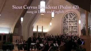 Albinoni Adagio for Strings in G Minor (Sicut Cervus Desiderat)