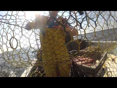 Locals Seafood - Blue Crabs From NC Fishermen