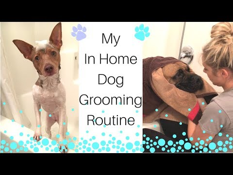 My In Home Dog Grooming Routine | How Give Your Dog A Bath | Cleaning Motivation | Dog Bath