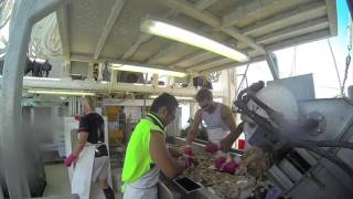 AUSTRALIA PRAWN TRAWLER FISHING 2014
