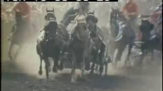 Vintage Calgary Stampede | Chuck Wagon racing | Magpie | 1973