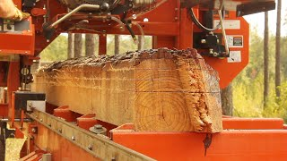 Milling a Dead Tree, Finding Treasure Inside