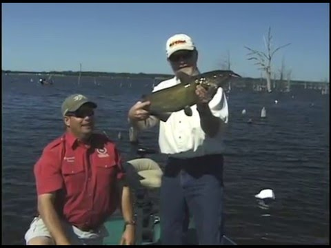 Lake Fork Frog Fishing, How To from YouTube · High Definition · Duration:  22 minutes 57 seconds  · 5,000+ views · uploaded on 10/18/2016 · uploaded by YourLakeForkGuide