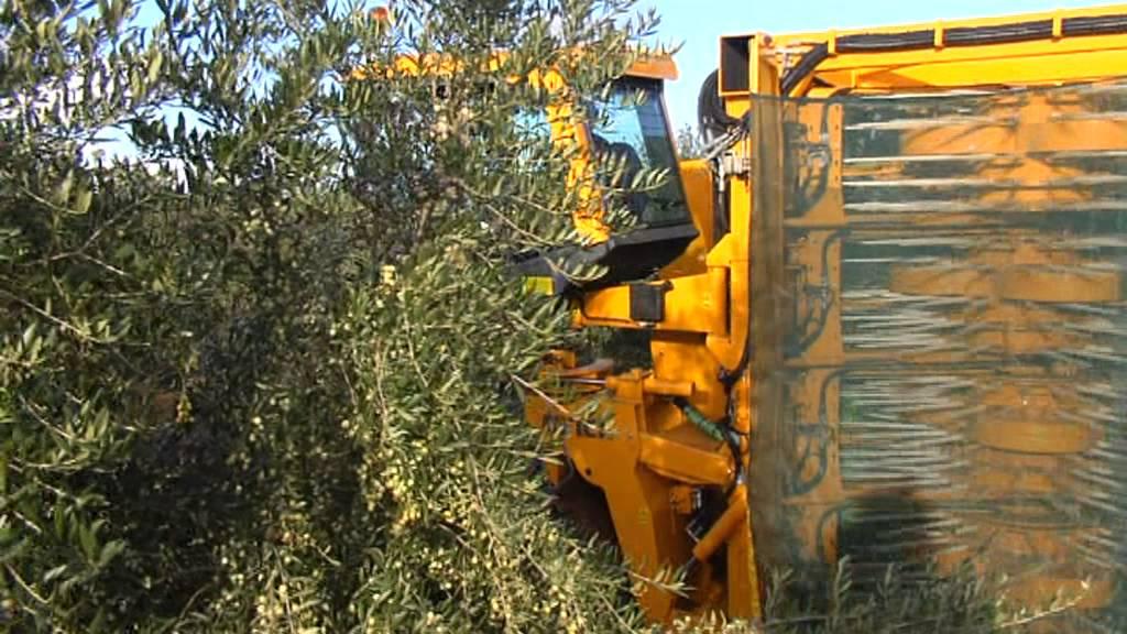 Olive Harvester GREGOIRE G10