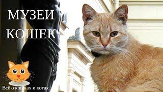 Музеи кошек. Интересные музеи кошек.