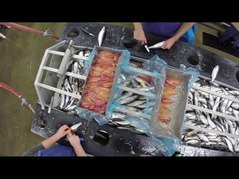 How To Process Herring Roe