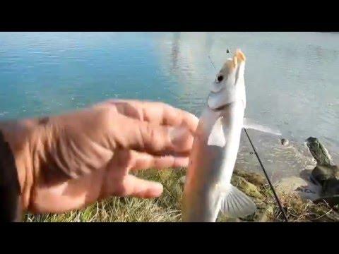 Рыбалка   Осенняя ловля на поплавочную снасть