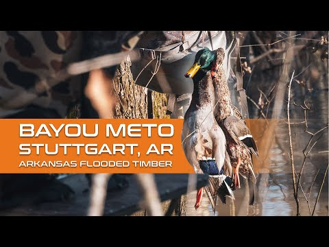 What Happens When Saddle Hunters Go Duck Hunting? Bayou Meto - Stuttgart, Arkansas