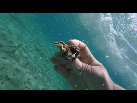 underwater adriatics august 2016