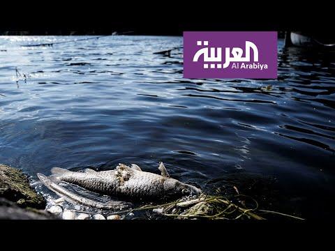 خزان صافر ينذر بكارثة بيئية خطيرة  - نشر قبل 8 ساعة