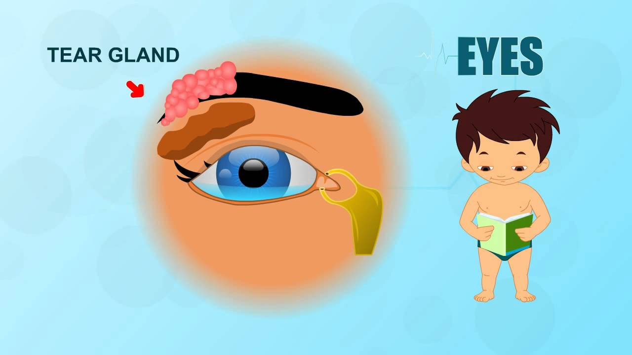 eyes - human body parts - pre school