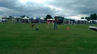 Dima Yeremenko Performing At All About Dogs (part 2)