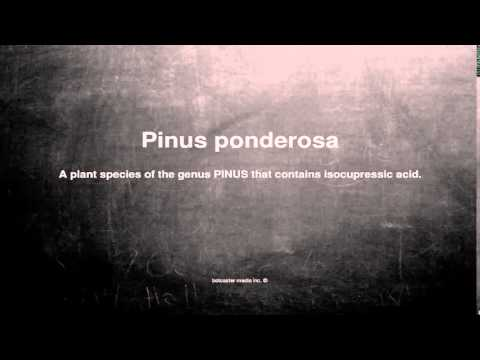 Medical vocabulary: What does Pinus ponderosa mean