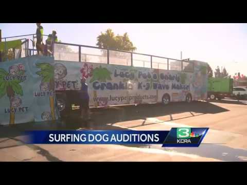 Surfing dogs audition in Stockton for 2017 Rose Parade