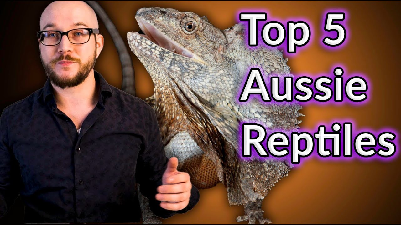 Top 5 Coolest Australian Reptiles That Make Great Pets