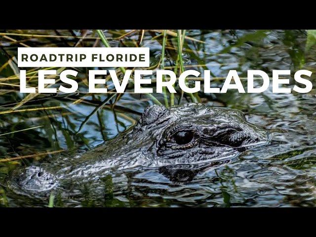 Randonnée dans les EVERGLADES en compagnie des ALLIGATORS - Road trip Floride #2
