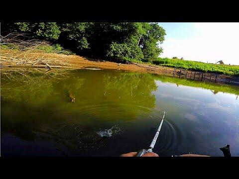 SECRET WHITE BASS HONEY HOLE -- ILLINOIS RIVER FISHING